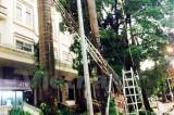 Hà Nội: 70 cột viễn thông của VNPT bị gãy đổ sau trận dông lốc