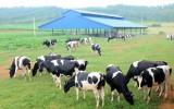 """Doanh nghiệp cam kết """"rót"""" 1 tỷ USD vào ngành chăn nuôi"""