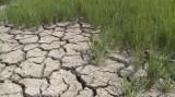 Thêm 150 tỷ đồng khắc phục hậu quả hạn hán và xâm nhập mặn