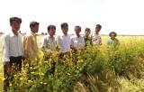 Tân Hưng: Cánh đồng công nghệ sinh thái trên lúa với hiệu quả kép