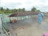 Tiêu độc khử trùng để bảo vệ đàn vật nuôi