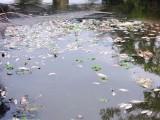 Quảng Nam: Cá chết vớt cả tuần không hết, hôi thối khắp vùng