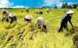 Doanh nghiệp - Đầu tàu dẫn dắt sản xuất nông nghiệp