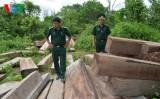 Quảng Trị: Phát hiện số lượng lớn gỗ không rõ nguồn gốc sát biên giới