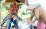 Săn cá đặc sản kiếm tiền triệu mỗi đêm