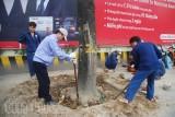 Hà Nội xử lý trách nhiệm vụ thay thế cây xanh