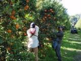 Ba loại trái cây Australia sắp được tái nhập khẩu vào Việt Nam