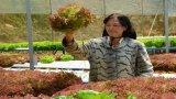 Cận cảnh vườn rau thủy canh bạc tỉ ở Đà Lạt