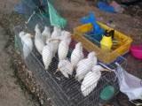 Rình rang chợ chim trời bên Quốc lộ 62