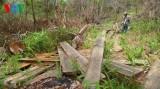 Ninh Thuận: Rừng đầu nguồn bị tàn phá nghiêm trọng