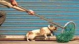 Sức khỏe dân phòng bị bọn trộm chó bắn ngất xỉu đã ổn định