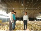 Kienlongbank dành 2.000 tỷ đồng ưu đãi nông nghiệp nông thôn