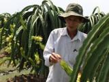 Châu Thành: Hiệu quả từ phong trào nông dân sản xuất-kinh doanh giỏi