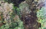Tìm thấy toàn bộ 54 thi thể trên máy bay Indonesia rơi ở Papua