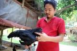 Gà 'Lamborgini' giá 50 triệu/con độc nhất Việt Nam