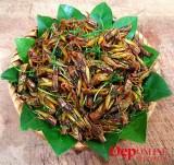 Châu chấu rang mùa gặt, món ngon của làng quê Bắc Bộ