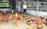 """Chính sách là """"thủ phạm"""" khiến ngành chăn nuôi bị tụt lại phía sau?"""