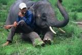 Chiêm ngưỡng voi Tây nguyên qua ống kính người Nhật
