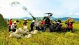 Rau quả Việt Nam gặp hạn vì Trung Quốc