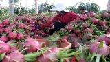 Xuất khẩu nông sản, khoáng sản giảm cả về lượng và giá trị