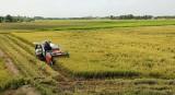 Bài 1: Nông dân được mùa - Doanh nghiệp kinh doanh bền vững