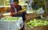 """Nông nghiệp - nông dân miền Tây còn """"ngơ ngác"""" với TPP"""