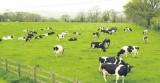"""Rút hết vốn tại """"con bò sữa tỷ đô"""": Kịch bản nào sẽ xảy ra?"""
