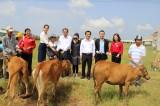 50 con bò giống được trao cho các hộ nghèo xã biên giới