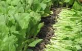 Cần tăng cường kiểm tra, giám sát vệ sinh, an toàn thực phẩm trong lĩnh vực nông nghiệp