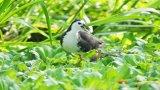 Khu Bảo tồn đất ngập nước Láng Sen - Khu Ramsar thứ 7 của Việt Nam