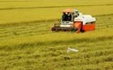 ĐBSCL chuẩn bị đón làn sóng đầu tư Nhật vào nông nghiệp