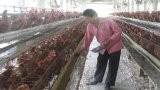 Bến Lức: Kiểm soát, kiểm dịch động vật những tháng cuối năm