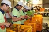25% doanh nghiệp Nhật rời Trung Quốc đã chọn VN