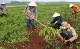 Việt Nam cấp mới 102 dự án đầu tư ra nước ngoài