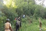 Cuộc trốn chạy trong rừng của nhóm cướp taxi