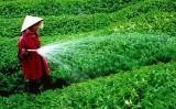 Để người tiêu dùng an tâm dùng sản phẩm sạch