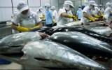 Cá ngừ Việt Nam nhập khẩu vào Mỹ bị kiểm tra