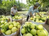Sản lượng trái cây phục Tết Bính Thân có thể giảm mạnh
