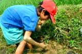 Quà của ruộng đồng