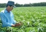 Long An chuyển diện tích trồng đay sang sản xuất lúa 2 vụ
