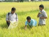 Kinh tế hợp tác có vai trò quan trọng trong sản xuất nông nghiệp