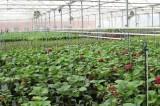 Gia nhập AEC, FTA: Nông sản cần theo tiêu chuẩn GAP