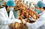Bộ Nông nghiệp chỉ đạo ngăn chặn virus A/H7N9 xâm nhập vào Việt Nam