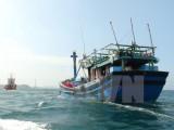 Cứu hộ an toàn 8 ngư dân trên tàu cá bị tàu Hàn Quốc đâm chìm