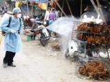 Công bố hai ổ dịch cúm gia cầm H5N6 đầu tiên của năm 2016