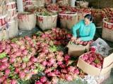 Với TPP, trái cây Việt Nam sẵn sàng chinh phục thị trường khó tính