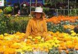 Nét đẹp chợ hoa ngày tết
