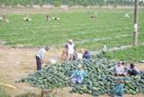 Tái cơ cấu ngành nông nghiệp-xây dựng nông thôn mới: 2 nhiệm vụ, 1 mục tiêu