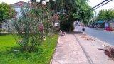 Phản hồi bài viết: Có nên trồng cây trúc đào ở công viên?