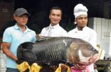 """Bốn con cá """"khủng"""" về tới nhà hàng TP.HCM"""